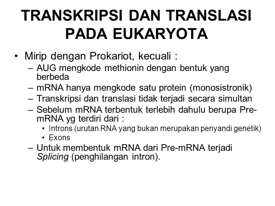 TRANSKRIPSI DAN TRANSLASI PADA EUKARYOTA