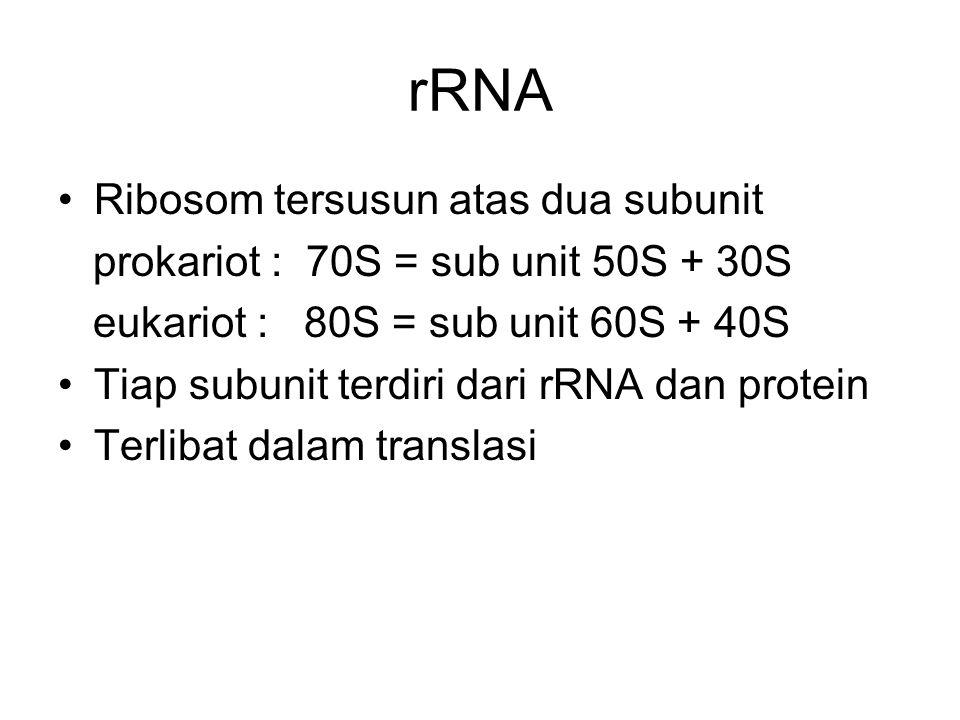 rRNA Ribosom tersusun atas dua subunit