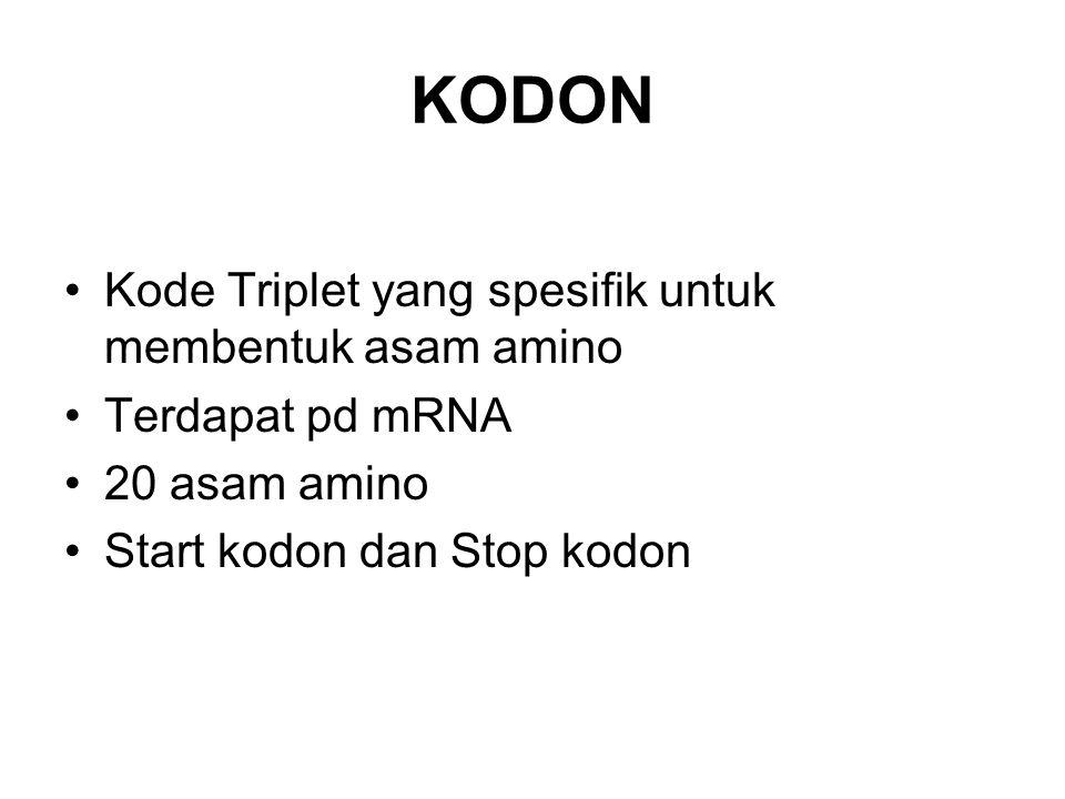 KODON Kode Triplet yang spesifik untuk membentuk asam amino