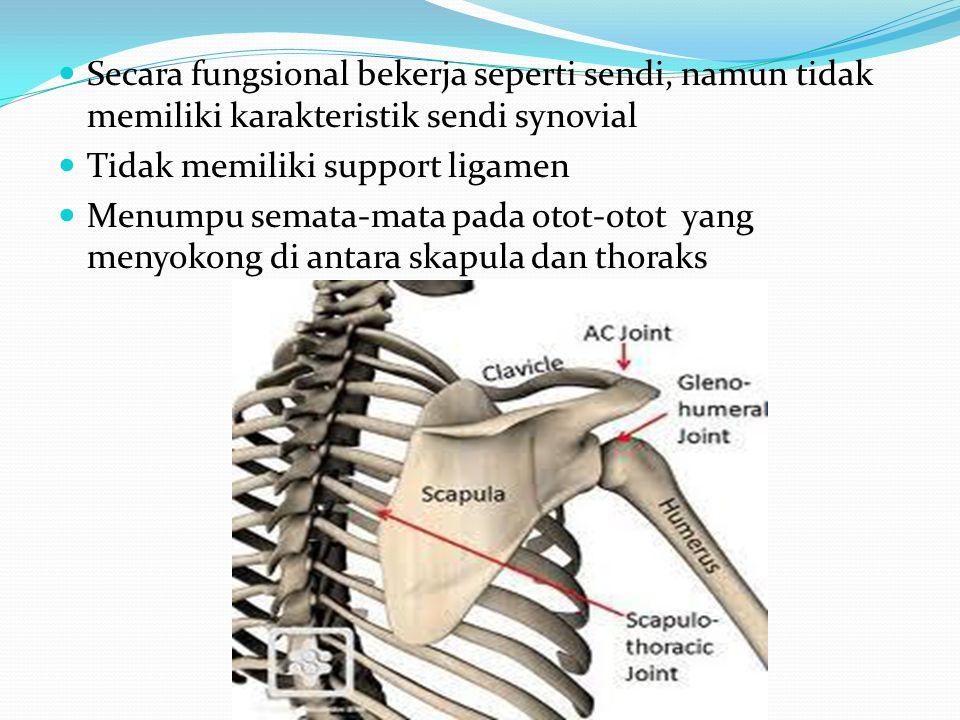 Secara fungsional bekerja seperti sendi, namun tidak memiliki karakteristik sendi synovial