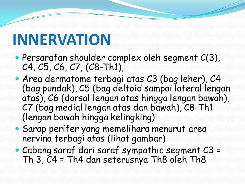 INNERVATION Persarafan shoulder complex oleh segment C(3), C4, C5, C6, C7, (C8-Th1),
