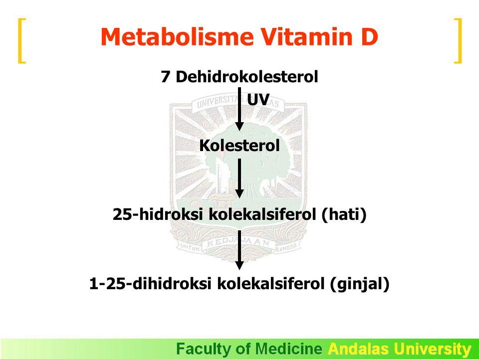 Metabolisme Vitamin D 7 Dehidrokolesterol UV Kolesterol
