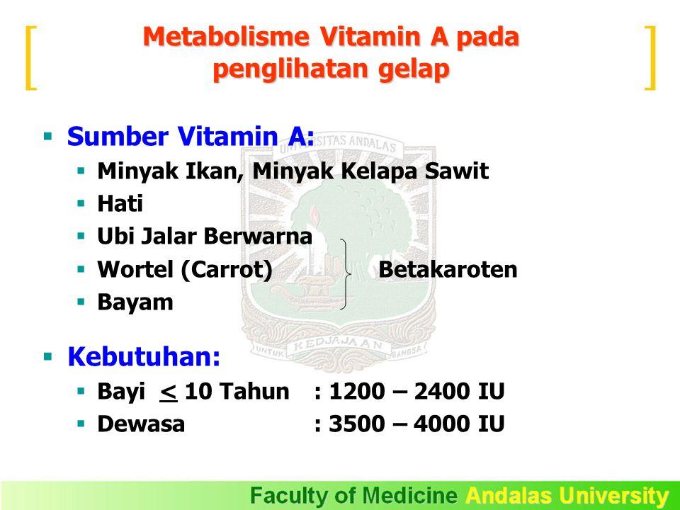 Metabolisme Vitamin A pada penglihatan gelap