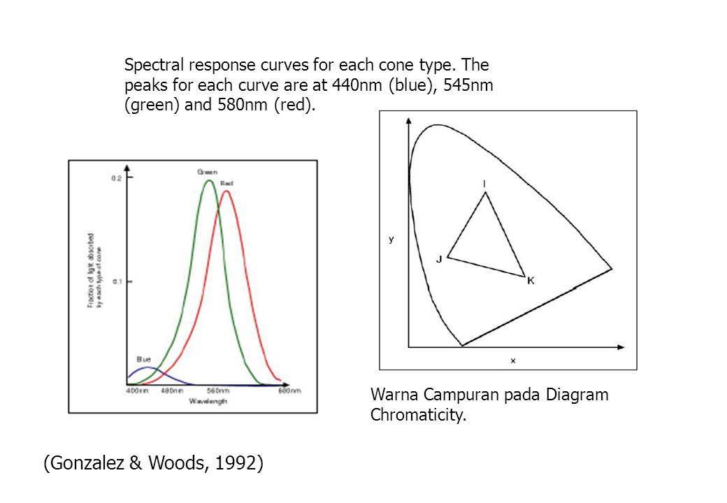 Spectral response curves for each cone type