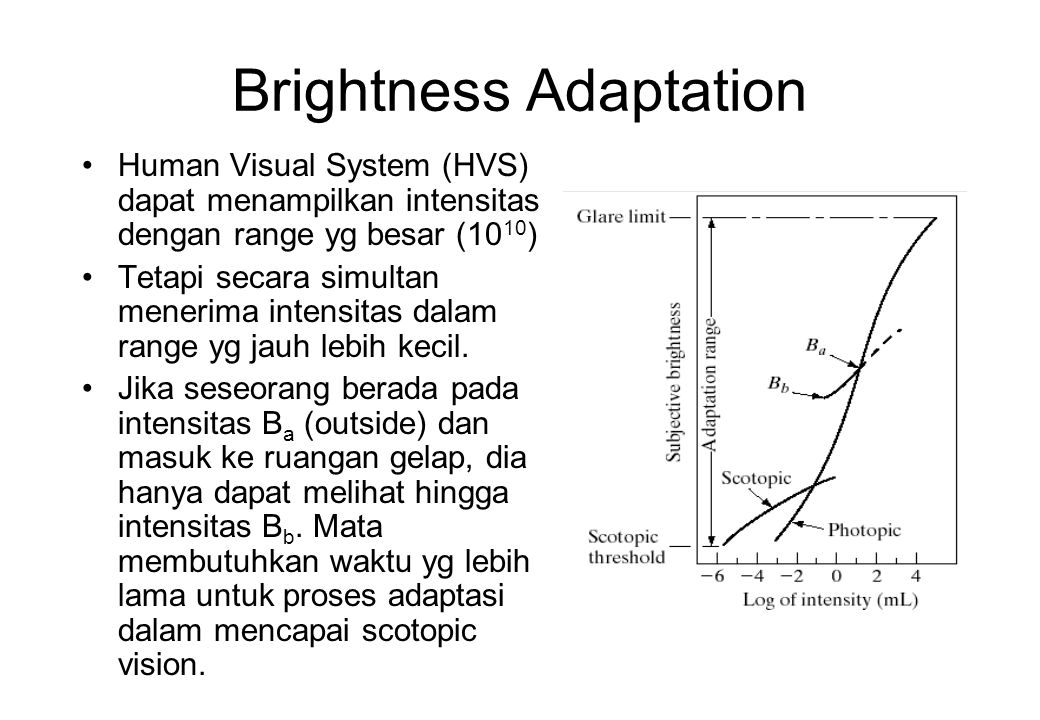 Brightness Adaptation