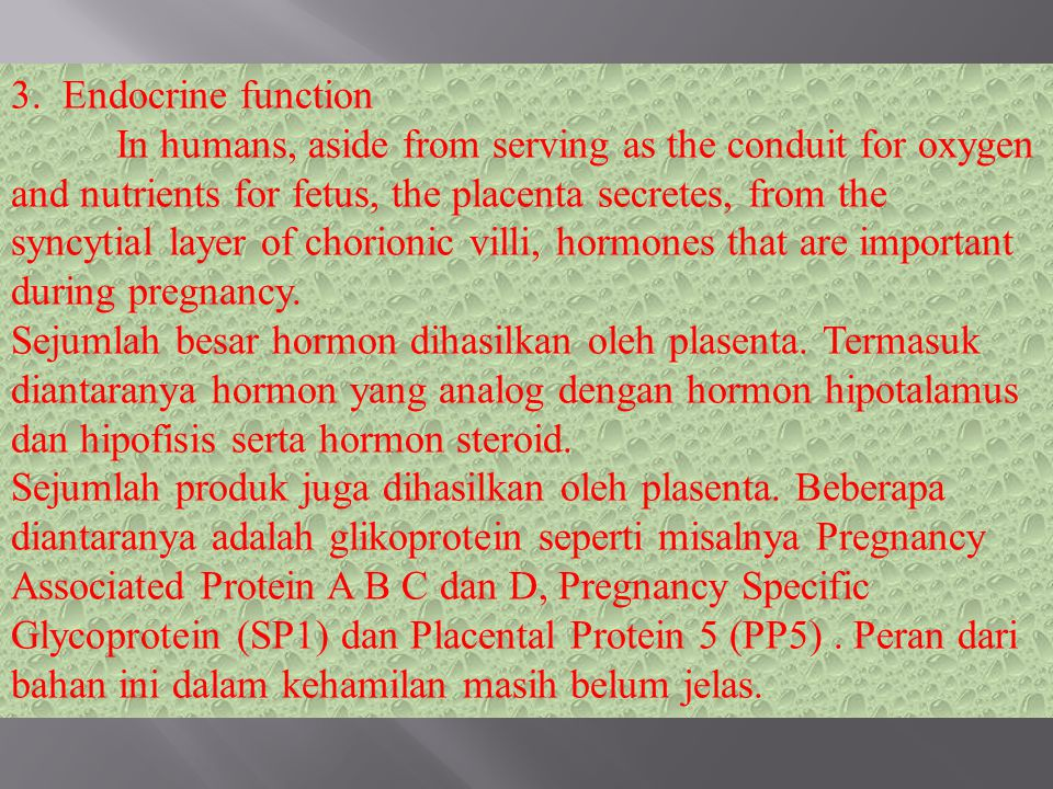 3. Endocrine function