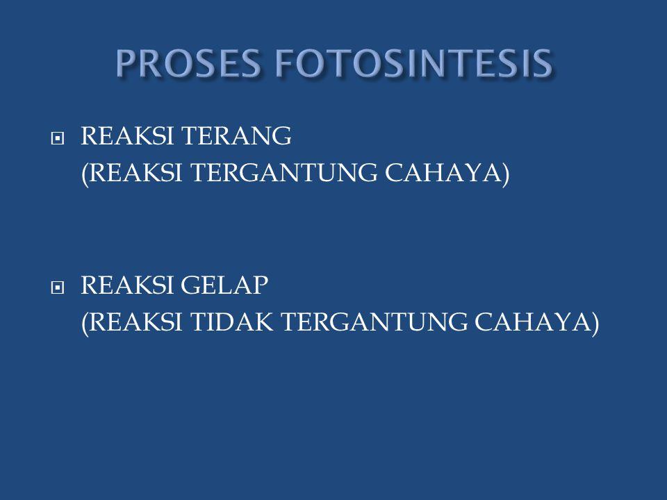 PROSES FOTOSINTESIS REAKSI TERANG (REAKSI TERGANTUNG CAHAYA)