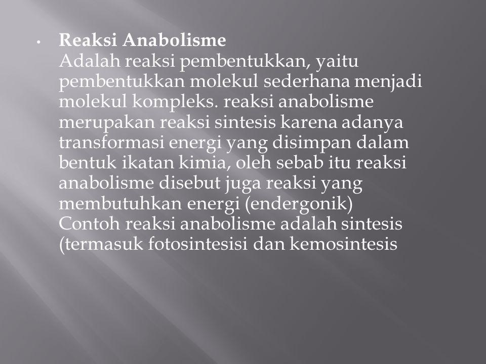 Reaksi Anabolisme Adalah reaksi pembentukkan, yaitu pembentukkan molekul sederhana menjadi molekul kompleks.