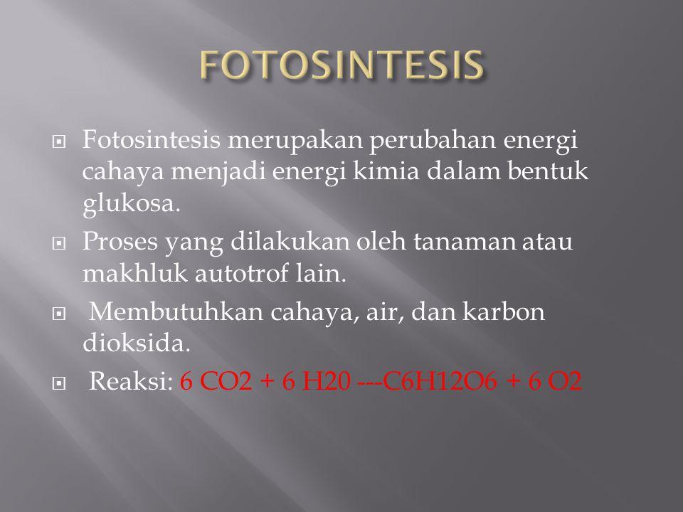 FOTOSINTESIS Fotosintesis merupakan perubahan energi cahaya menjadi energi kimia dalam bentuk glukosa.