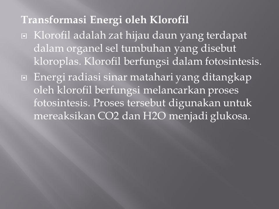 Transformasi Energi oleh Klorofil