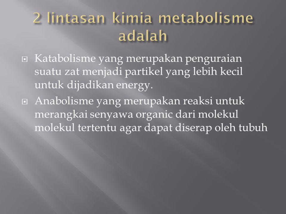 2 lintasan kimia metabolisme adalah