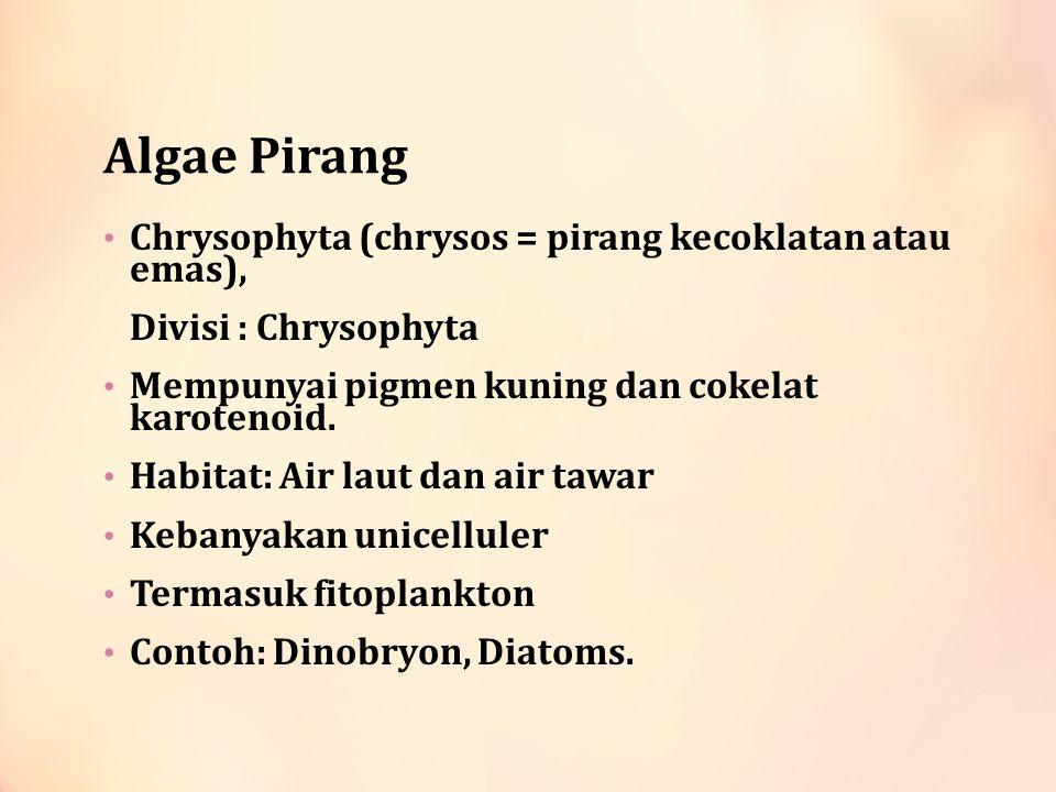 Algae Pirang Chrysophyta (chrysos = pirang kecoklatan atau emas),