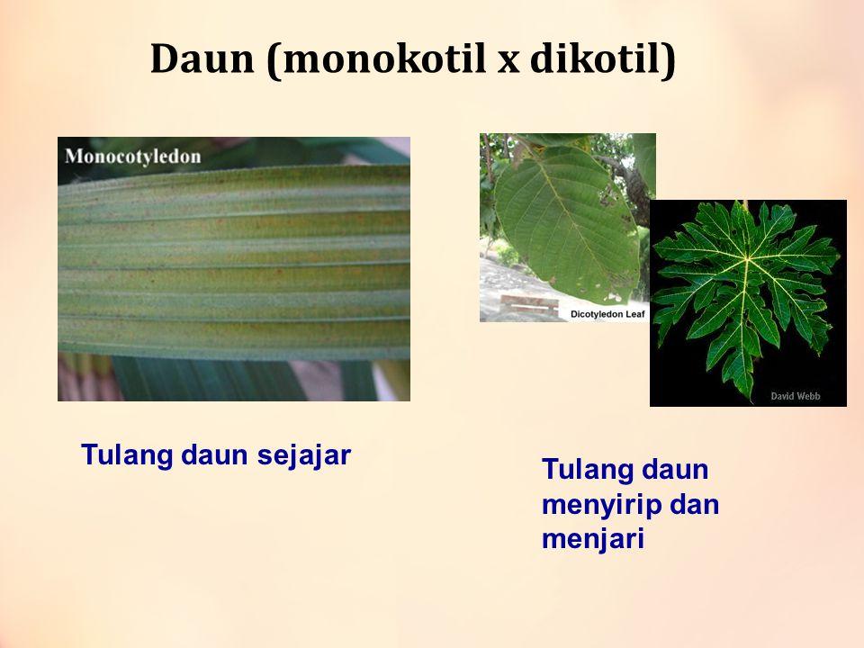 Daun (monokotil x dikotil)