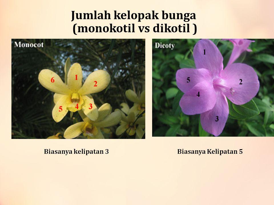 Jumlah kelopak bunga (monokotil vs dikotil )