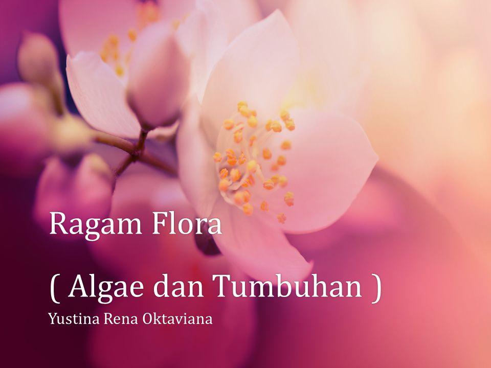 Ragam Flora ( Algae dan Tumbuhan )