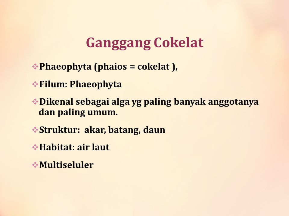 Ganggang Cokelat Phaeophyta (phaios = cokelat ), Filum: Phaeophyta