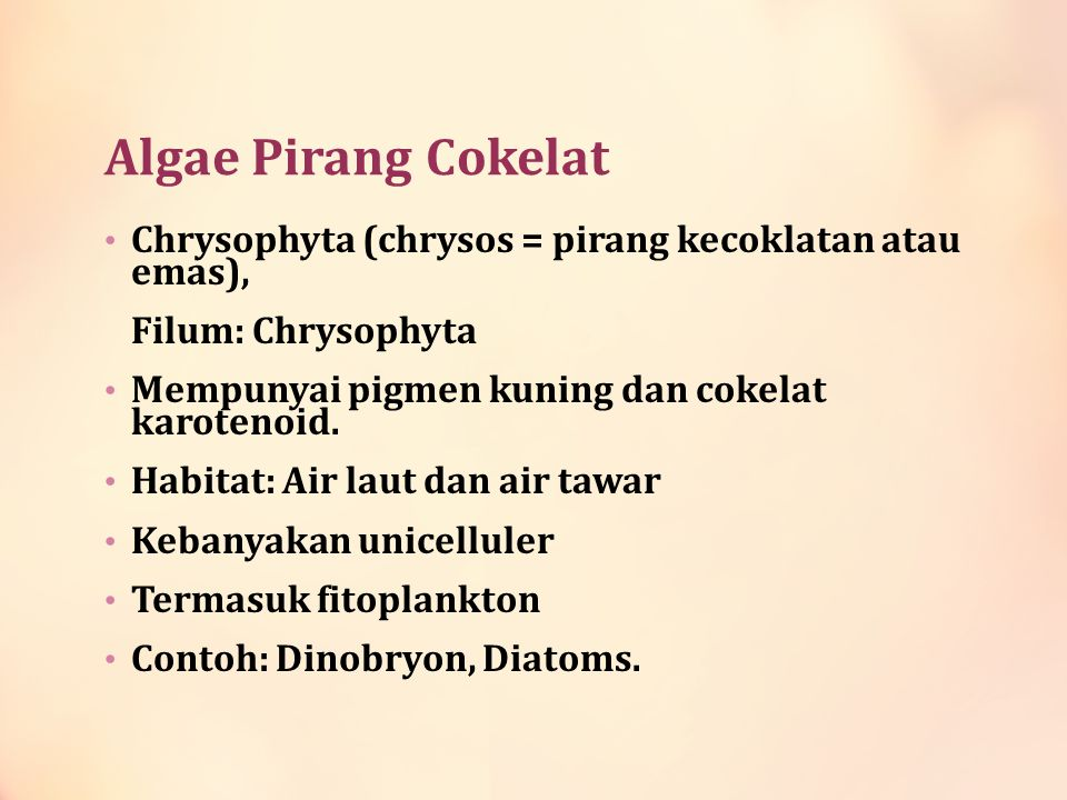 Algae Pirang Cokelat Chrysophyta (chrysos = pirang kecoklatan atau emas), Filum: Chrysophyta. Mempunyai pigmen kuning dan cokelat karotenoid.