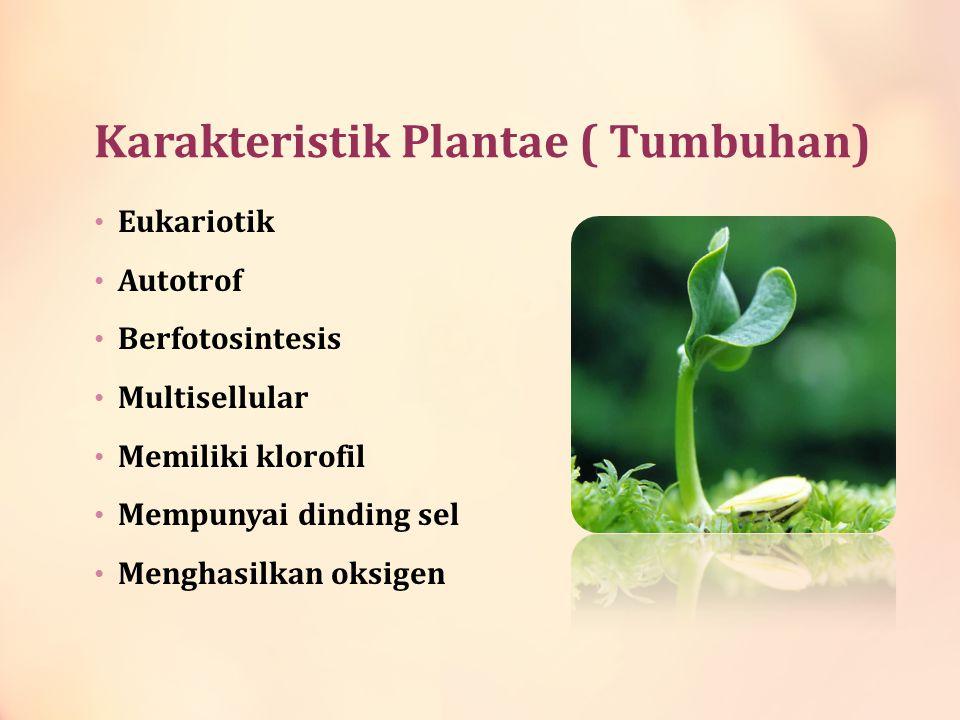 Karakteristik Plantae ( Tumbuhan)