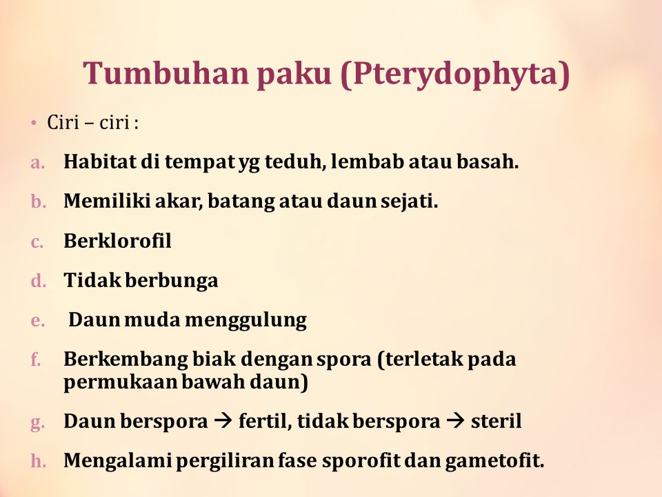 Tumbuhan paku (Pterydophyta)