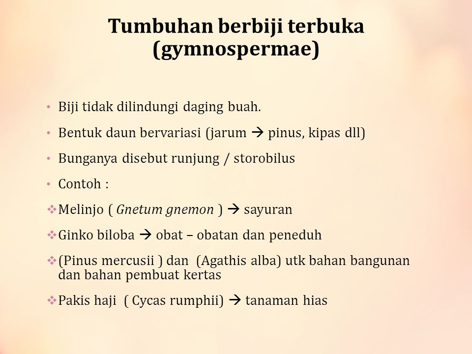 Tumbuhan berbiji terbuka (gymnospermae)