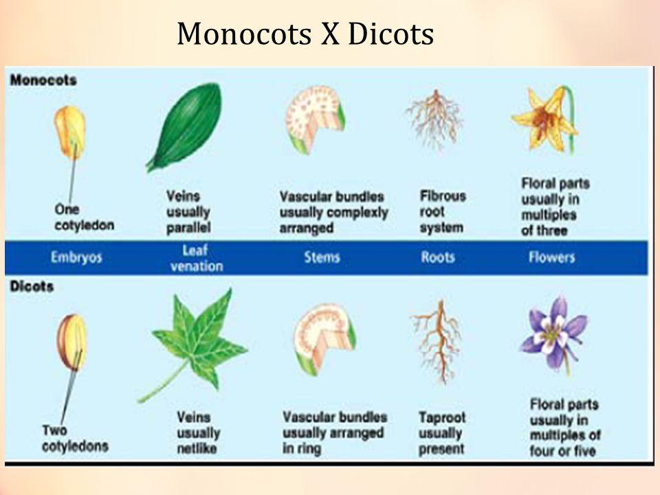 Monocots X Dicots