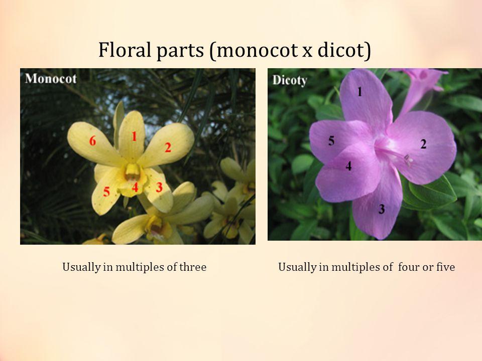 Floral parts (monocot x dicot)