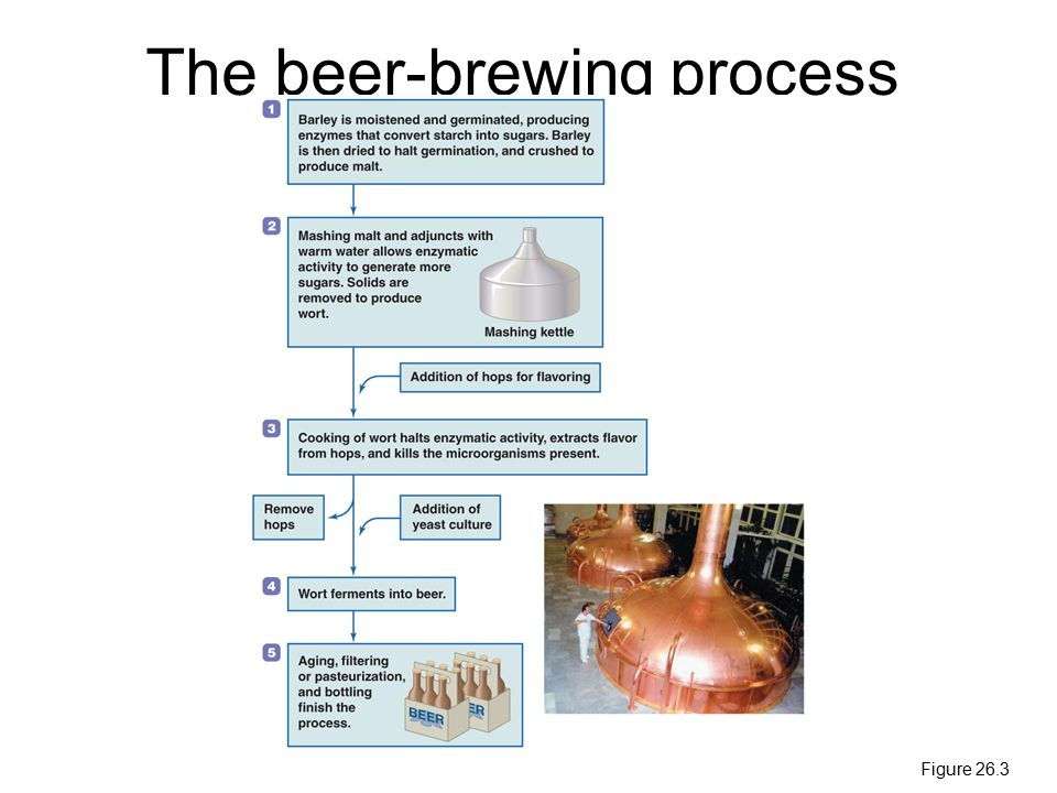 The beer-brewing process