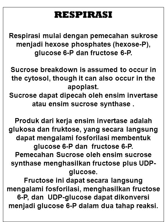RESPIRASI Respirasi mulai dengan pemecahan sukrose menjadi hexose phosphates (hexose-P), glucose 6-P dan fructose 6-P.