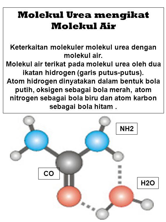 Molekul Urea mengikat Molekul Air