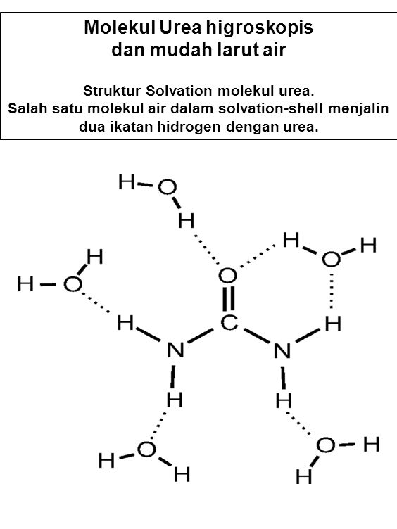 Molekul Urea higroskopis Struktur Solvation molekul urea.