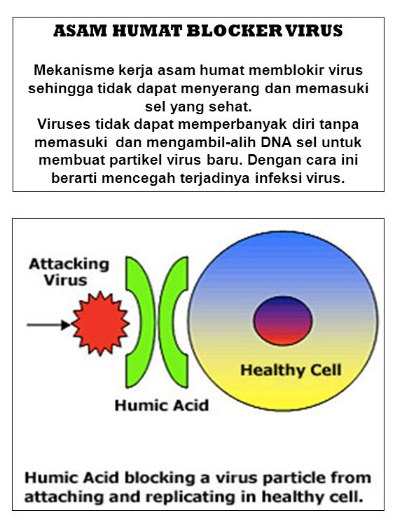 ASAM HUMAT BLOCKER VIRUS