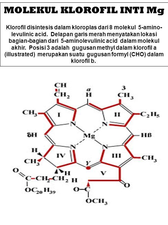 MOLEKUL KLOROFIL INTI Mg