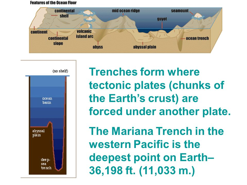 Trenches form where tectonic plates (chunks of the Earth's crust) are forced under another plate.