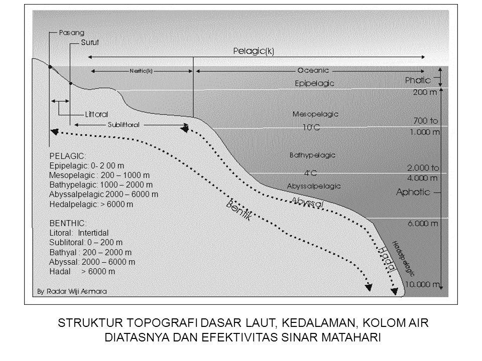 PELAGIC: Epipelagic: 0- 2 00 m. Mesopelagic : 200 – 1000 m. Bathypelagic: 1000 – 2000 m. Abyssalpelagic 2000 – 6000 m.