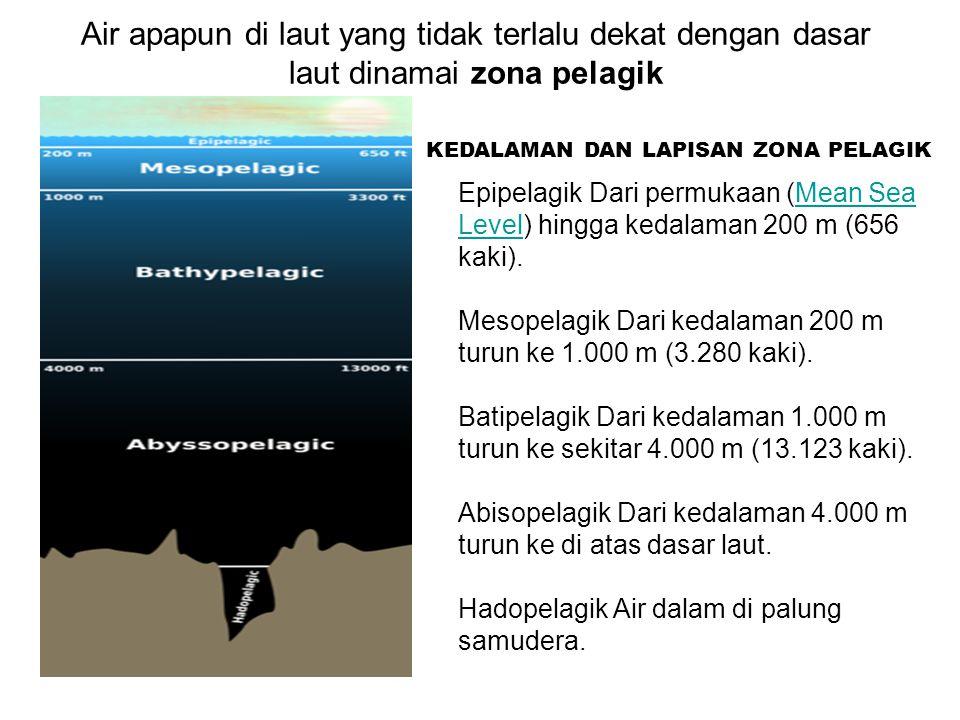 Air apapun di laut yang tidak terlalu dekat dengan dasar laut dinamai zona pelagik