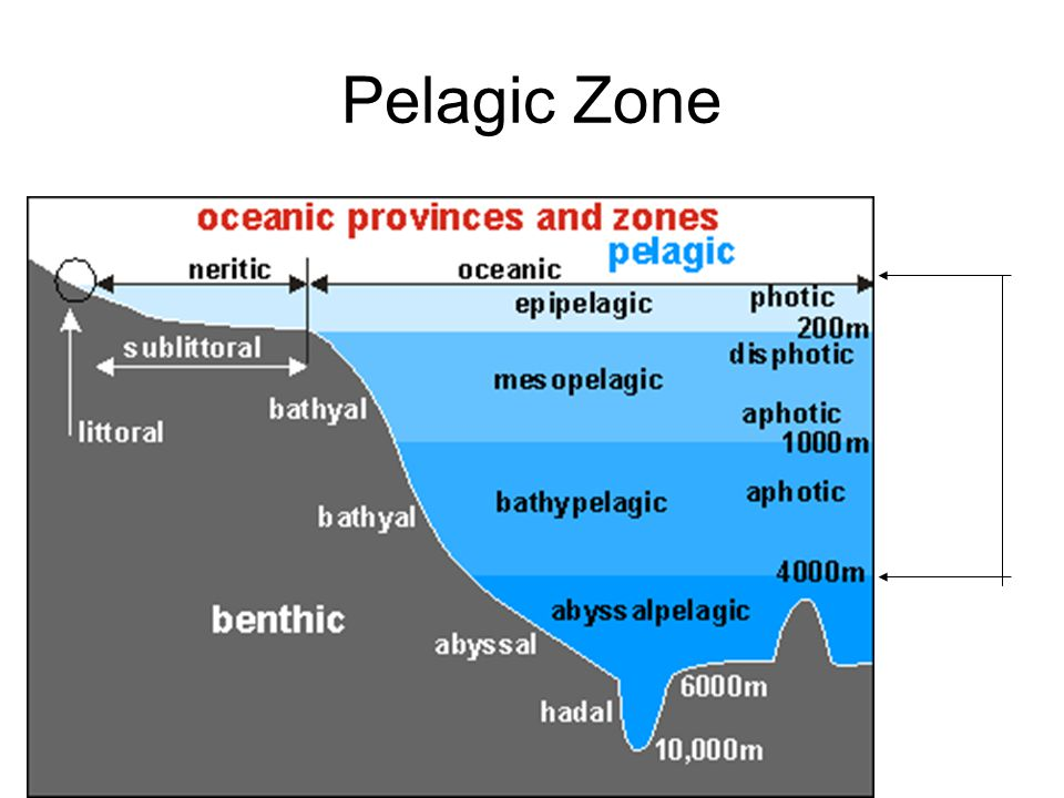 Pelagic Zone