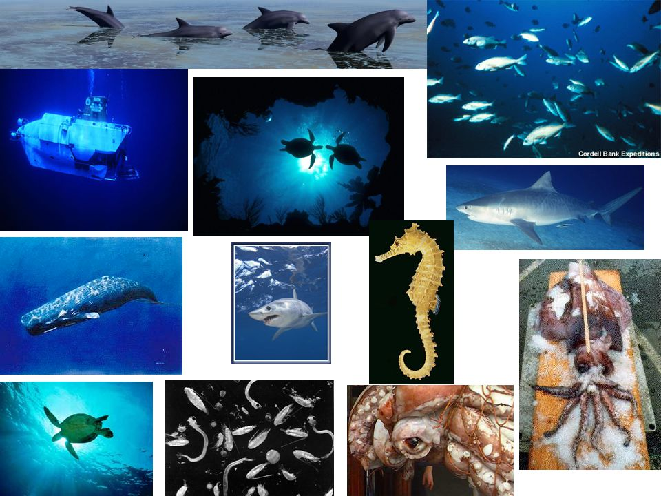 Dolphins, school of fish, submersible, sea turtles, shark, sperm whale, shark, seahorse, giant squid, sea turtle, plankton, eye of giant squid.