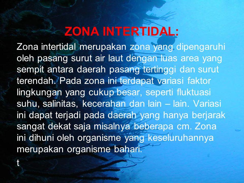 ZONA INTERTIDAL: