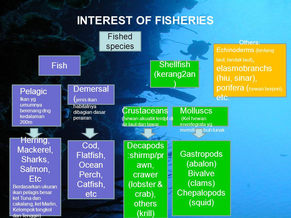 INTEREST OF FISHERIES Fished species Fish Shellfish (kerang2an)