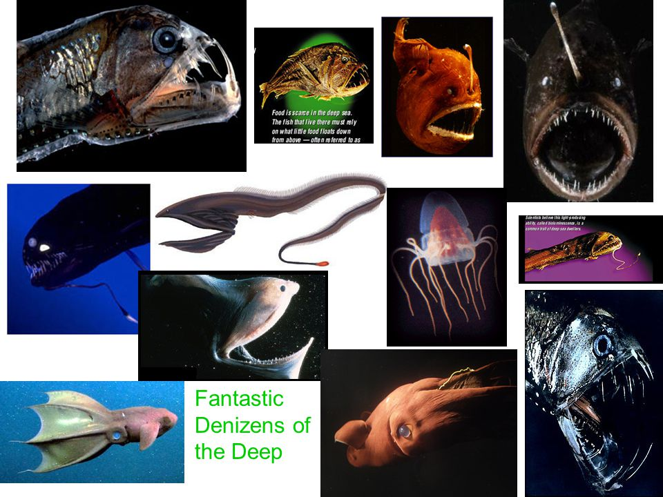 Fantastic Denizens of the Deep