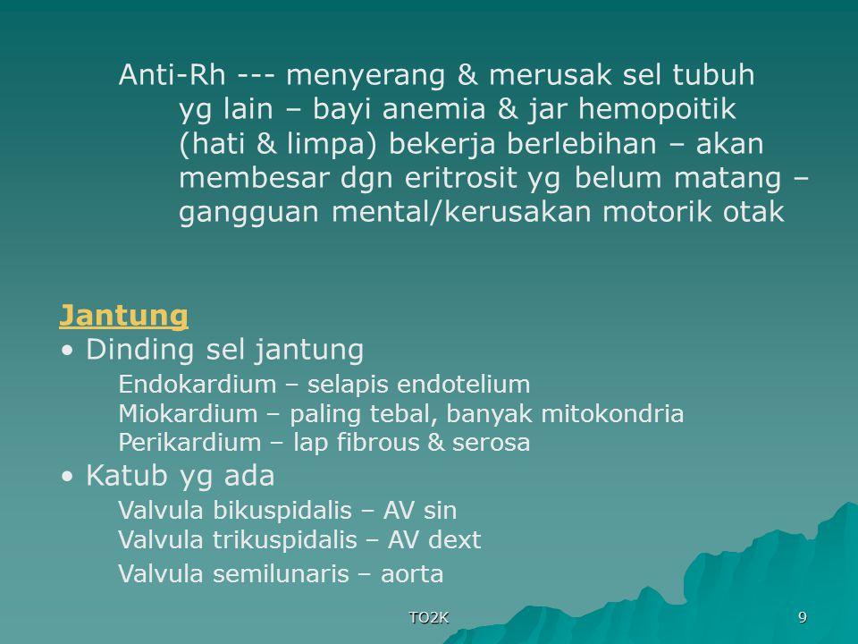Endokardium – selapis endotelium
