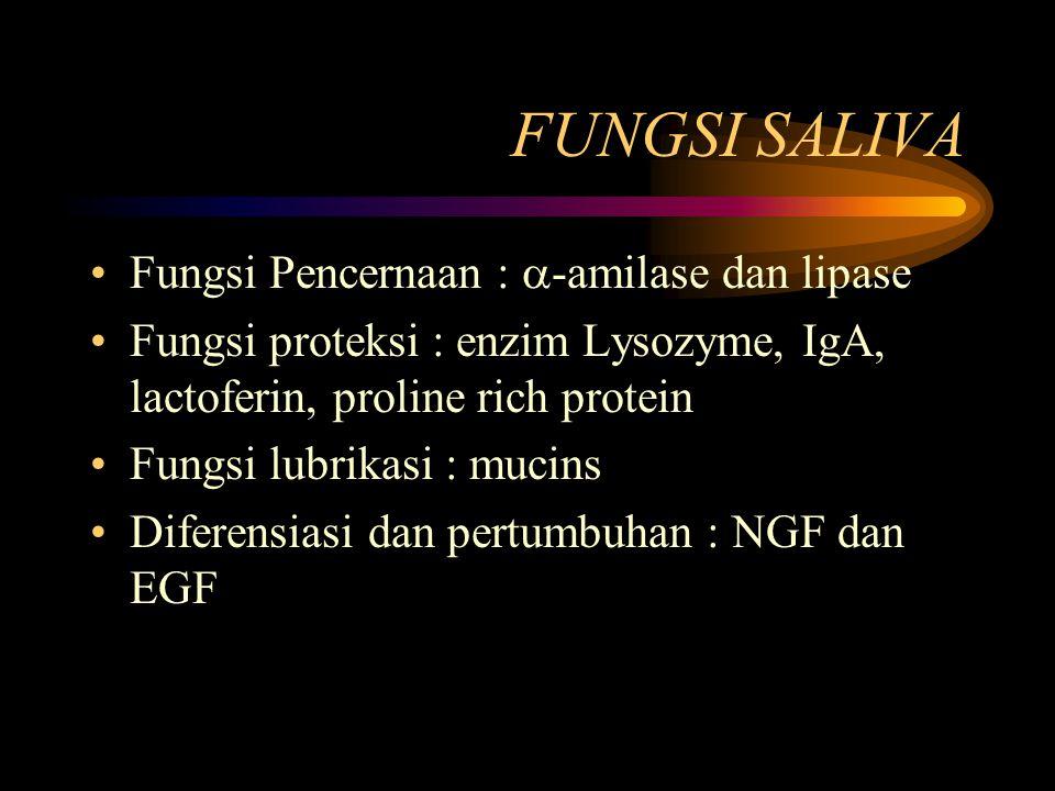 FUNGSI SALIVA Fungsi Pencernaan : -amilase dan lipase