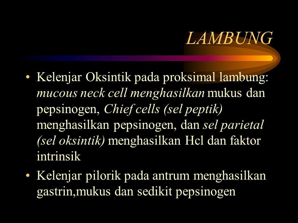 LAMBUNG