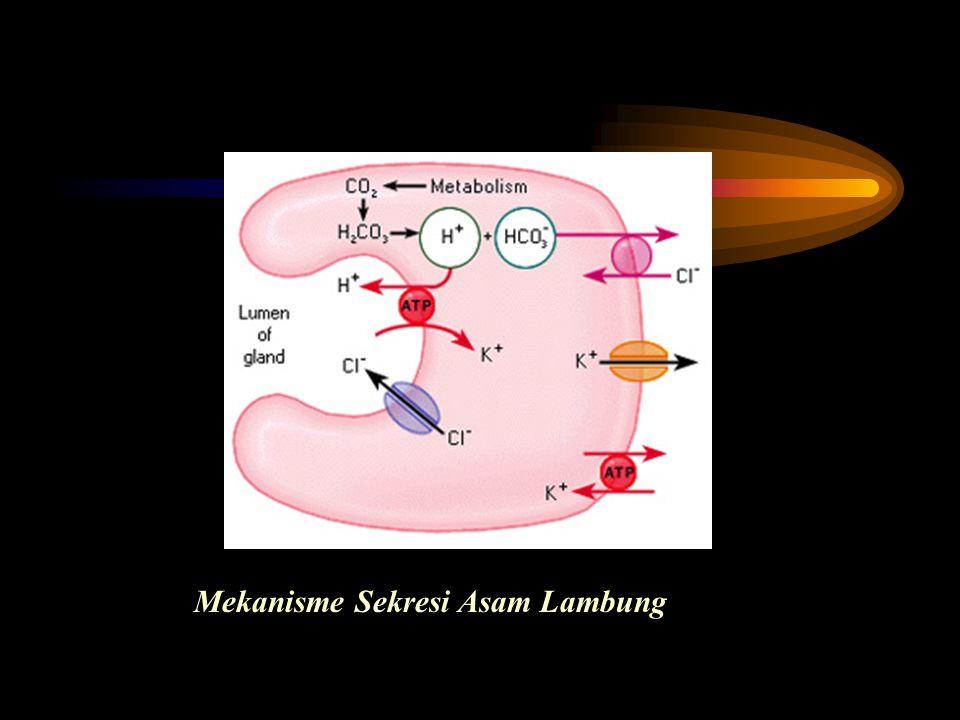 Mekanisme Sekresi Asam Lambung