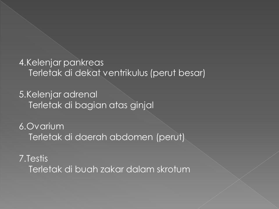 4.Kelenjar pankreas Terletak di dekat ventrikulus (perut besar) 5.Kelenjar adrenal. Terletak di bagian atas ginjal.