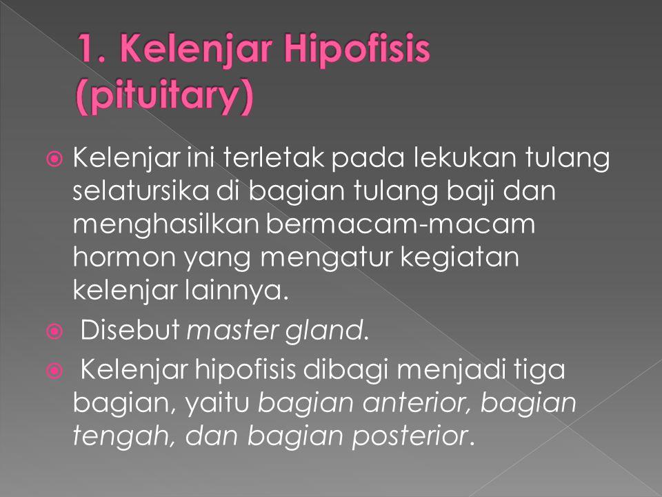 1. Kelenjar Hipofisis (pituitary)