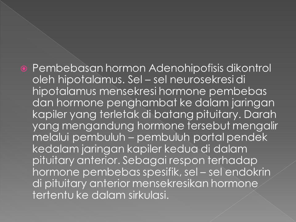 Pembebasan hormon Adenohipofisis dikontrol oleh hipotalamus