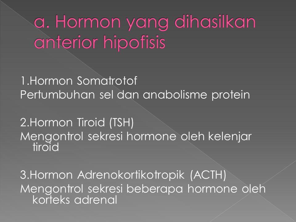 a. Hormon yang dihasilkan anterior hipofisis