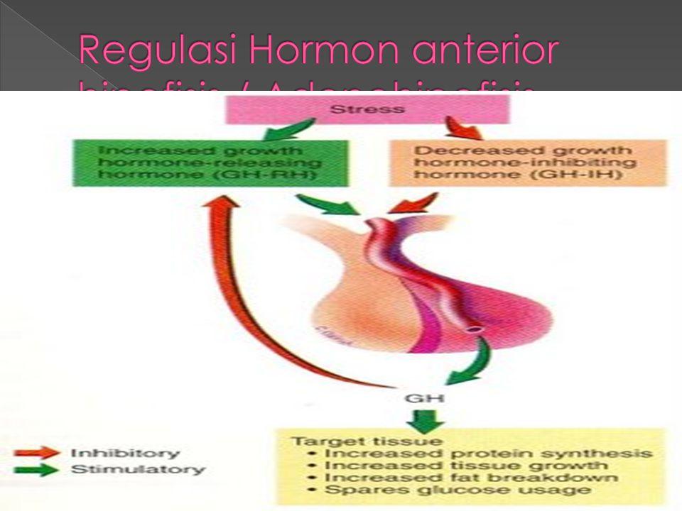 Regulasi Hormon anterior hipofisis / Adenohipofisis