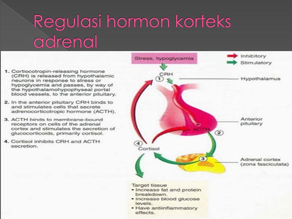 Regulasi hormon korteks adrenal